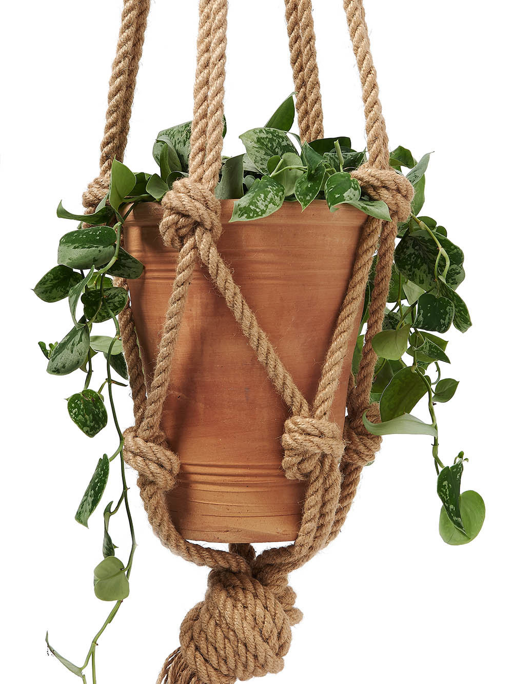 Detail shot of a macrame hanger with plant & pot