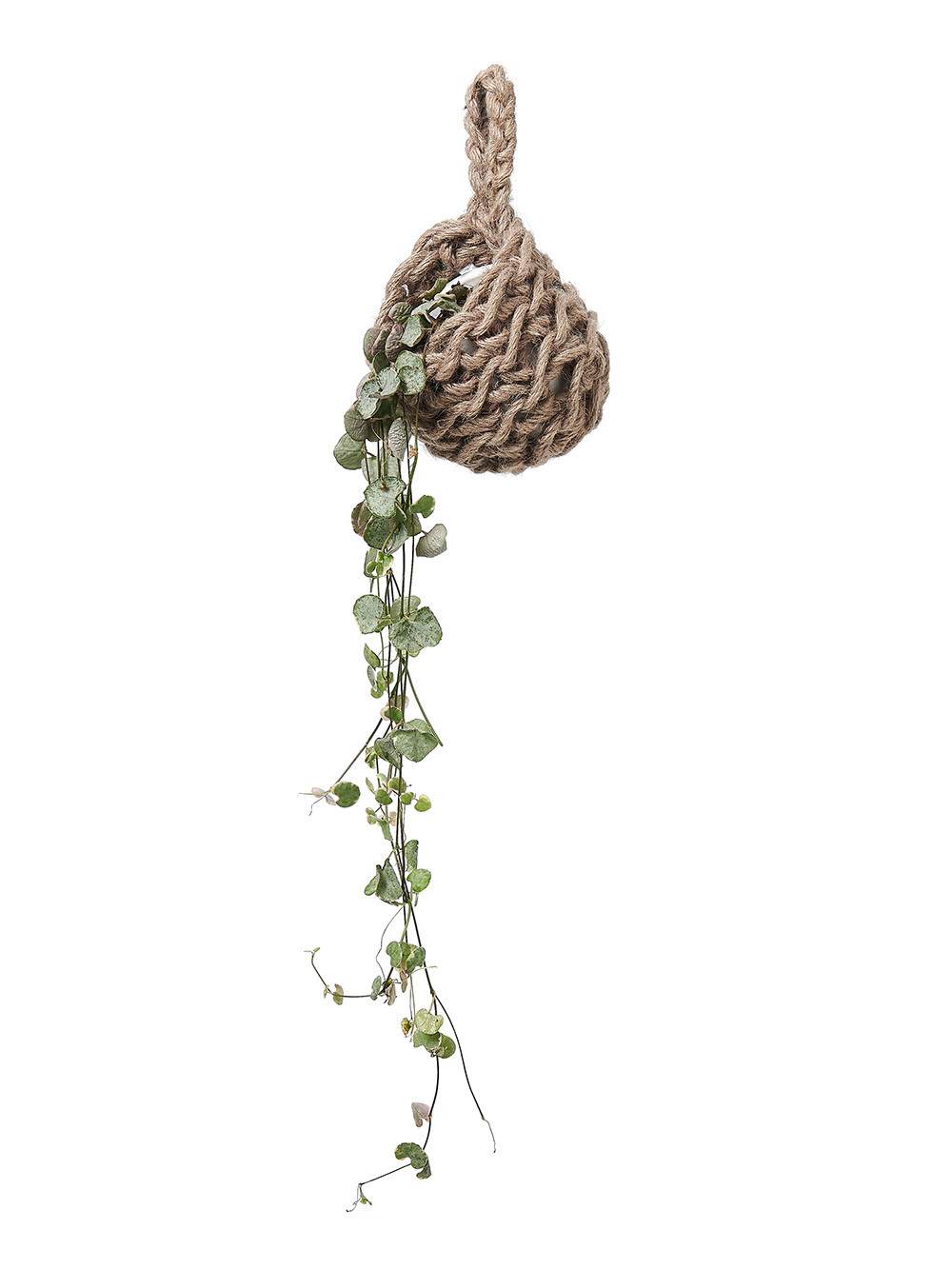 Homeware photography of a mini macrame planter & house plant